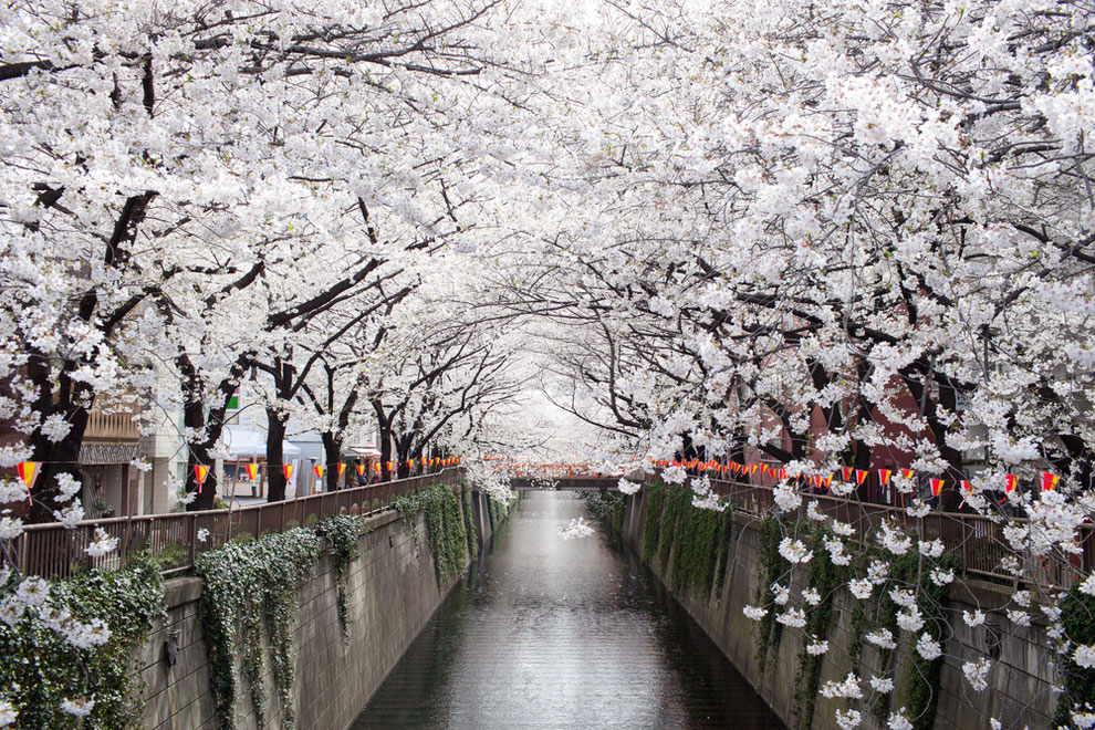 nakameguro-canal-japon
