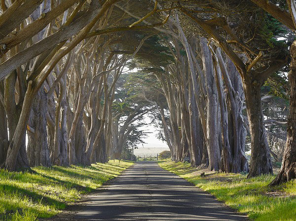 point-reyes-californie-tunnel-vegetal