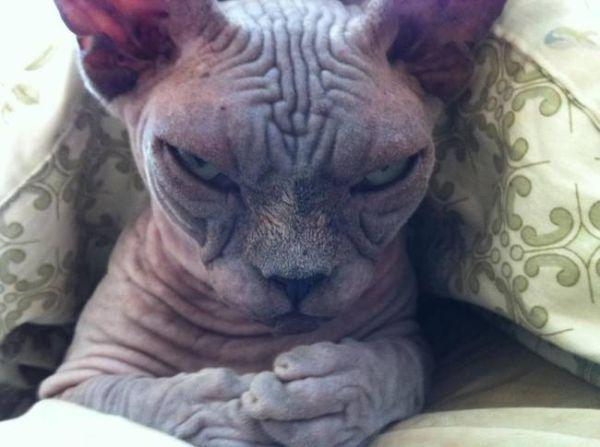a-few-signs-your-pet-may-be-plotting-to-kill-you-27-photos-10