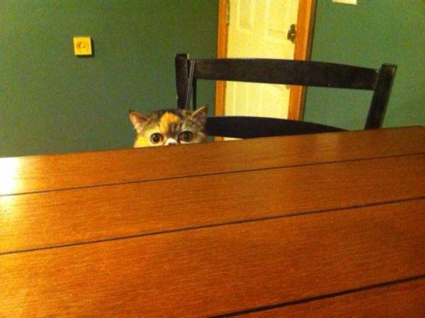 a-few-signs-your-pet-may-be-plotting-to-kill-you-27-photos-12