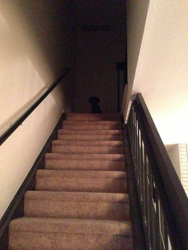 a-few-signs-your-pet-may-be-plotting-to-kill-you-27-photos-20