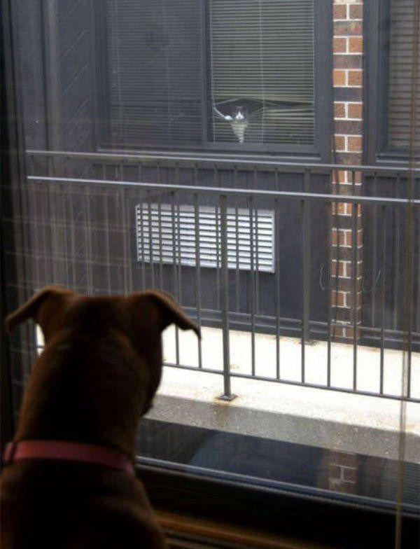 a-few-signs-your-pet-may-be-plotting-to-kill-you-27-photos-21-e1421970869423