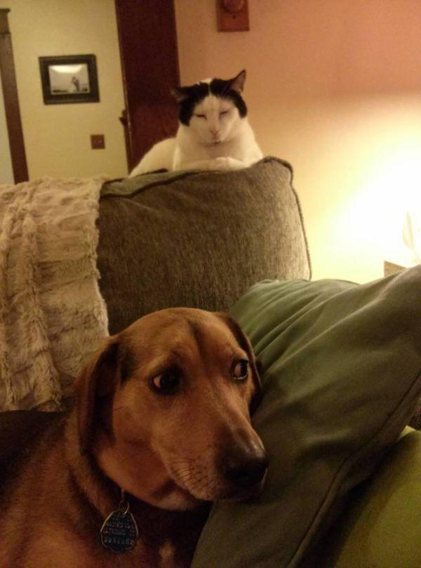 a-few-signs-your-pet-may-be-plotting-to-kill-you-27-photos-26