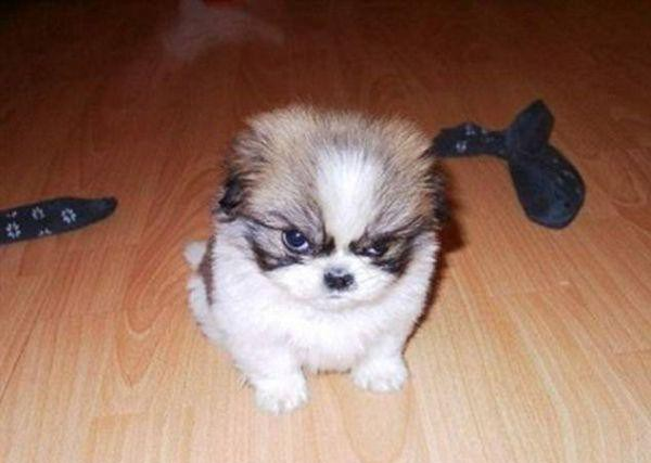 a-few-signs-your-pet-may-be-plotting-to-kill-you-27-photos-6-e1421970804543