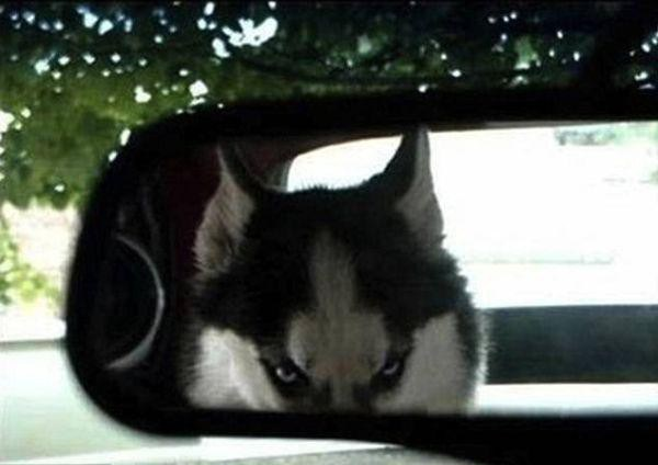 a-few-signs-your-pet-may-be-plotting-to-kill-you-27-photos-7-e1421970822601