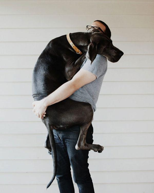 these-huge-dogs-think-theyre-puppies-28-photos-10