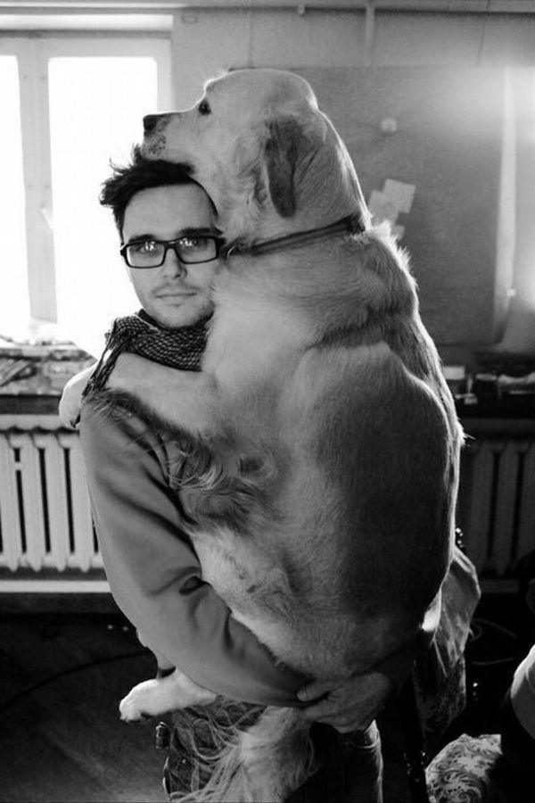 these-huge-dogs-think-theyre-puppies-28-photos-11