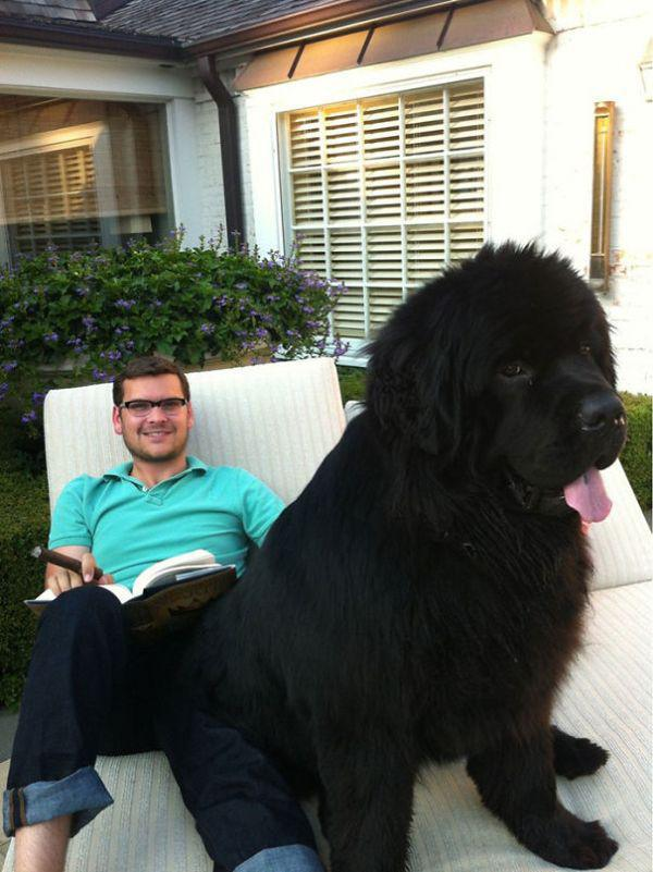 these-huge-dogs-think-theyre-puppies-28-photos-24